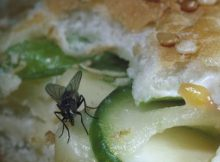 bahaya lalat dimakanan
